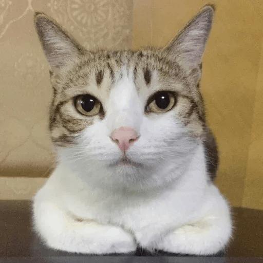 Meow:3 (2) - Sticker 10