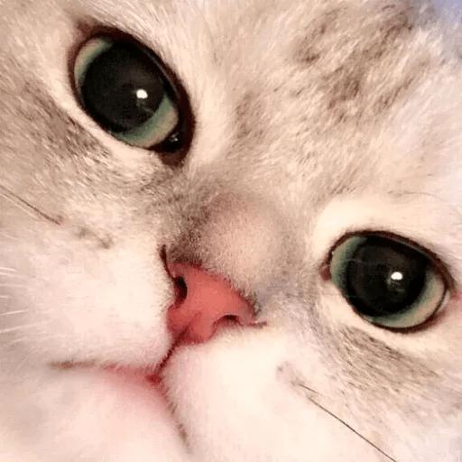 Meow:3 (2) - Sticker 13
