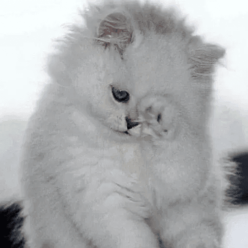 Meow:3 (2) - Sticker 5