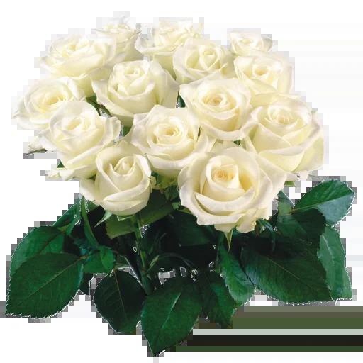 White Flowers @ykinanah - Sticker 24