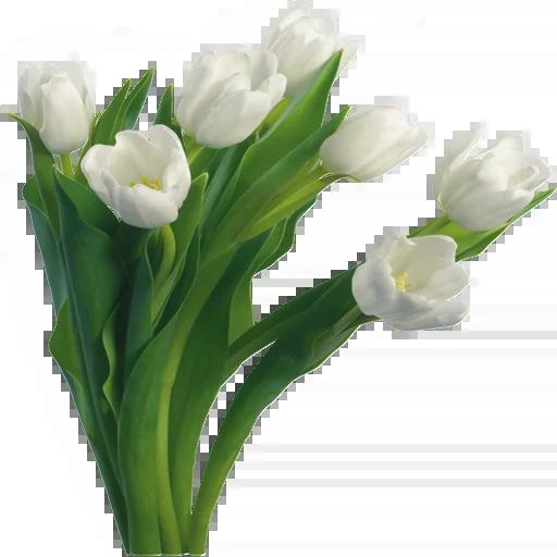 White Flowers @ykinanah - Sticker 12