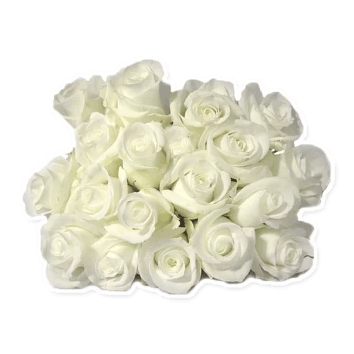 White Flowers @ykinanah - Sticker 4