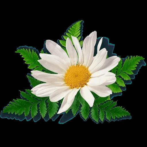 White Flowers @ykinanah - Sticker 27