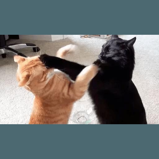 Real Cat meme 2 - Sticker 6
