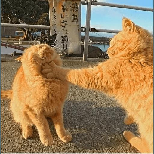 Real Cat meme 2 - Sticker 5