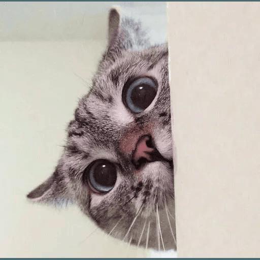 Real Cat meme 2 - Sticker 12