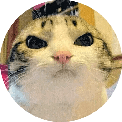 Real Cat meme 2 - Sticker 3