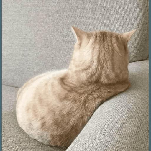Real Cat meme 2 - Sticker 2