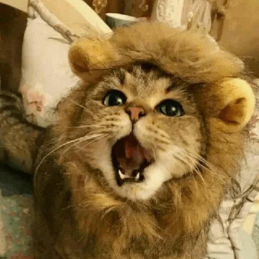 Real Cat meme 2 - Sticker 16