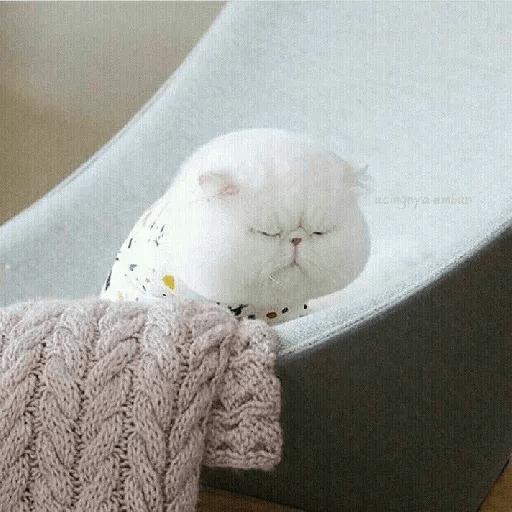 Real Cat meme 2 - Sticker 18