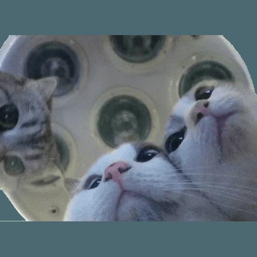 Real Cat meme 2 - Sticker 11