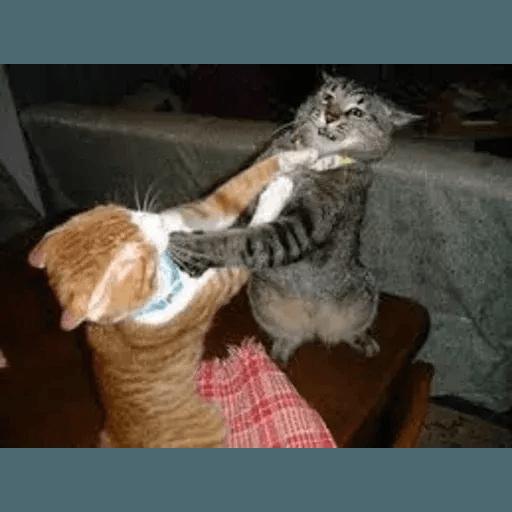 Real Cat meme 2 - Sticker 7