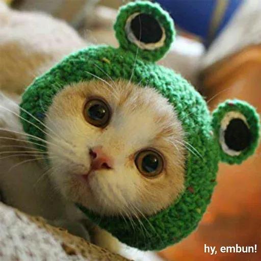 Real Cat meme 2 - Sticker 21