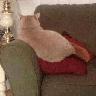 Real Cat meme 2 - Tray Sticker