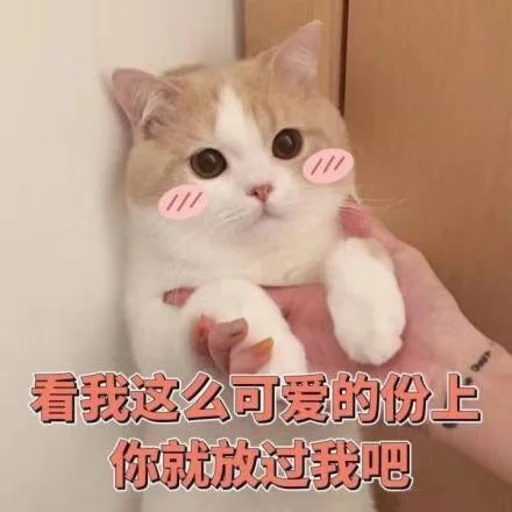 CuteCat3 - Sticker 3