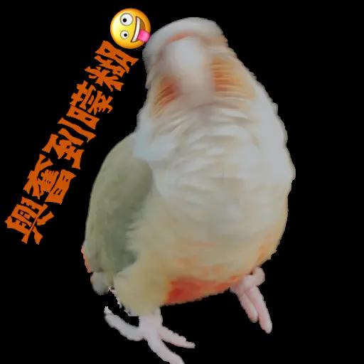 心心桔桔 - Sticker 2