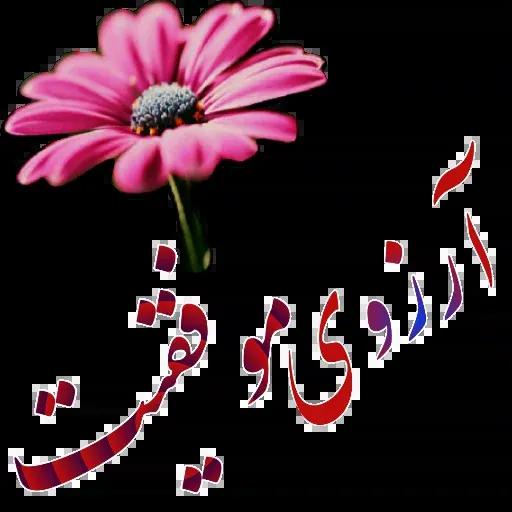 مراد اکبری - Sticker 6