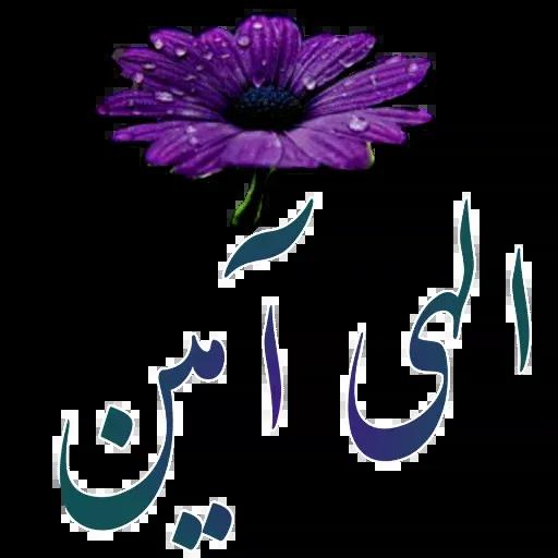 مراد اکبری - Sticker 24