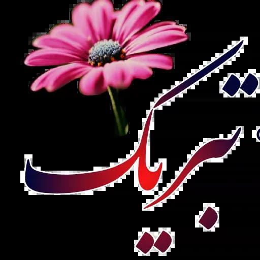 مراد اکبری - Sticker 10