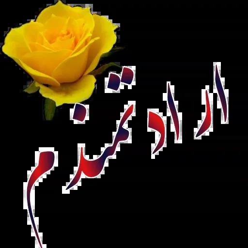 مراد اکبری - Sticker 27