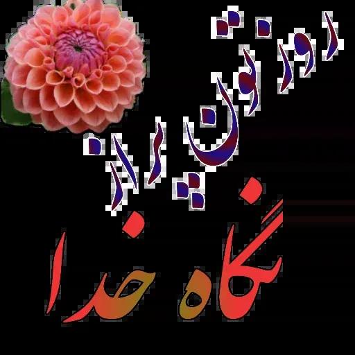 مراد اکبری - Sticker 18