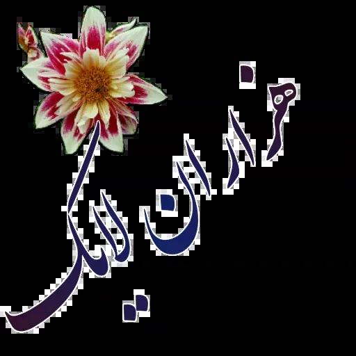 مراد اکبری - Sticker 16