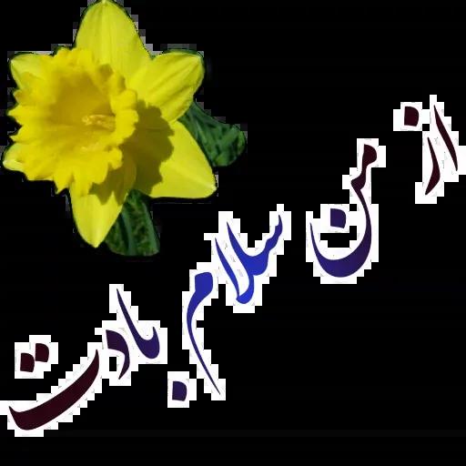 مراد اکبری - Sticker 7