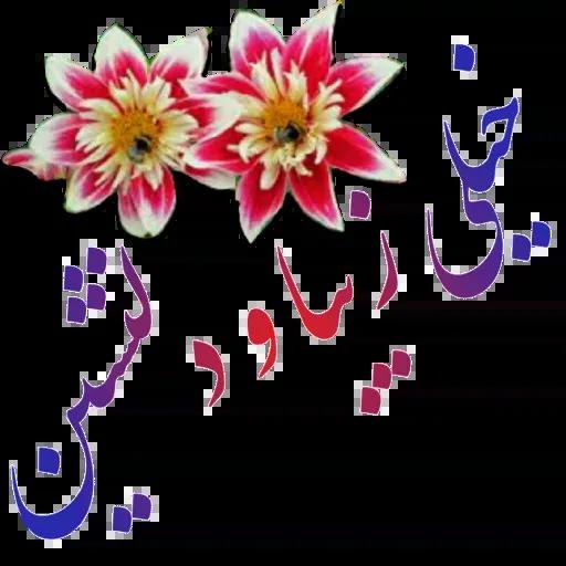 مراد اکبری - Sticker 5