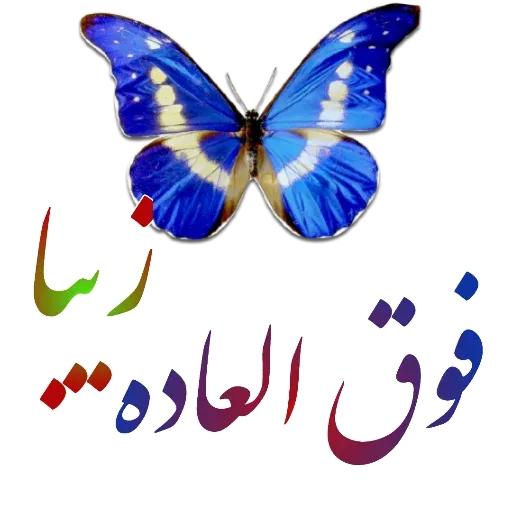 مراد اکبری - Sticker 15