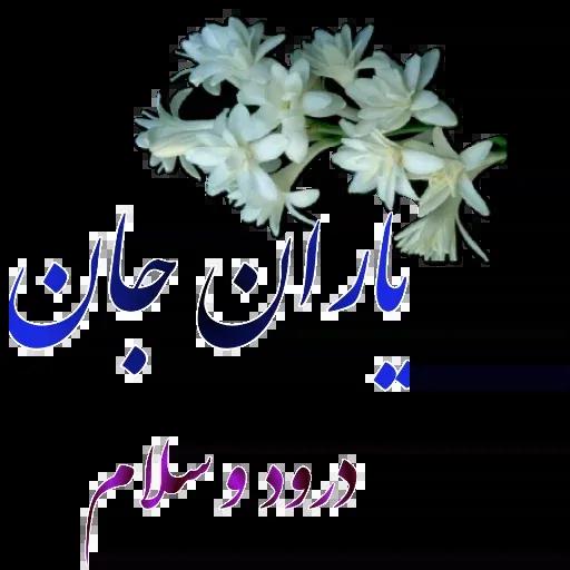 مراد اکبری - Sticker 2
