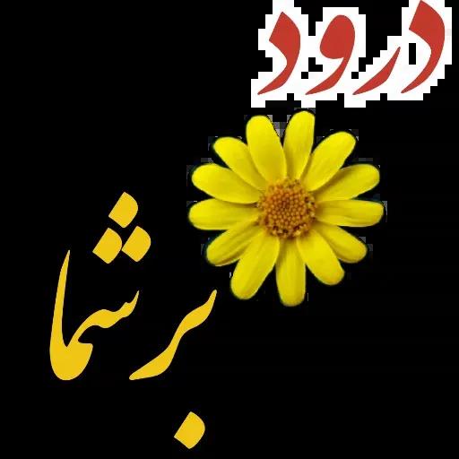 مراد اکبری - Sticker 22