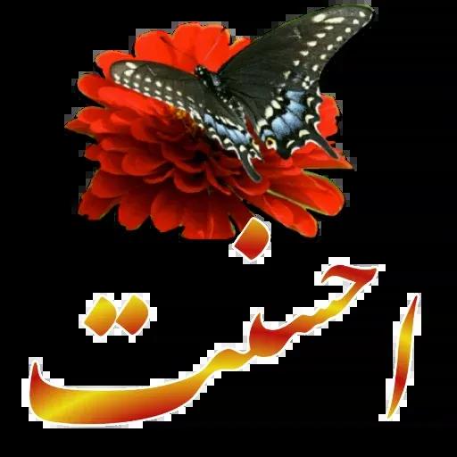 مراد اکبری - Sticker 8