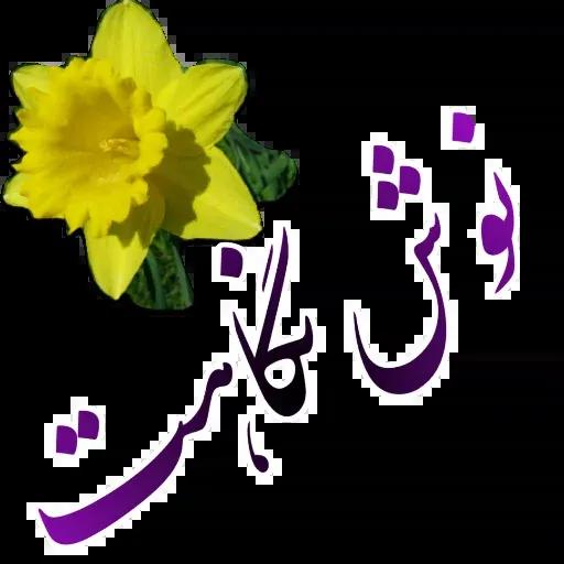 مراد اکبری - Sticker 21