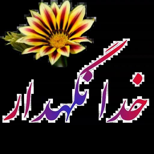 مراد اکبری - Sticker 25