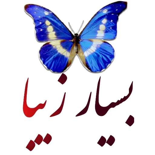 مراد اکبری - Sticker 3