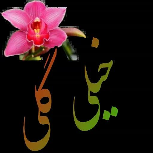 مراد اکبری - Sticker 12