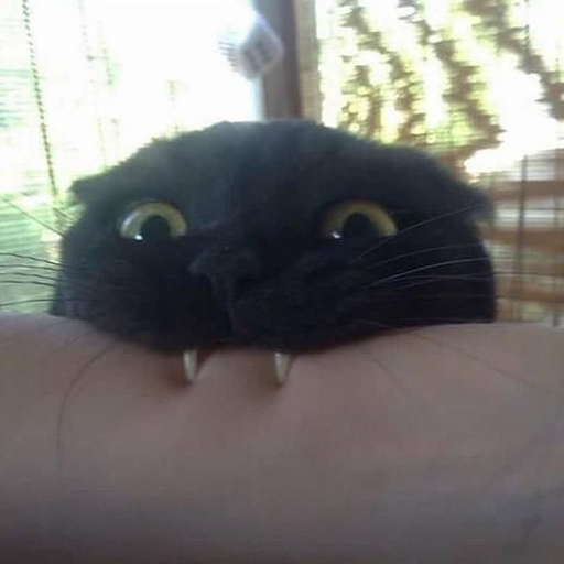 Black Cat 2.0 - Sticker 23