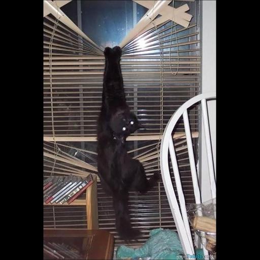 Black Cat 2.0 - Sticker 29