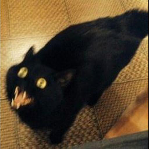 Black Cat 2.0 - Sticker 20