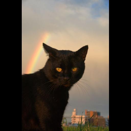 Black Cat 2.0 - Sticker 3