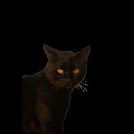 Black Cat 2.0 - Sticker 19