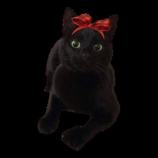 Black Cat 2.0 - Sticker 12