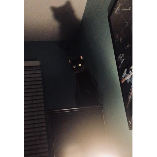 Black Cat 2.0 - Sticker 30