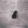 Black Cat 2.0 - Tray Sticker