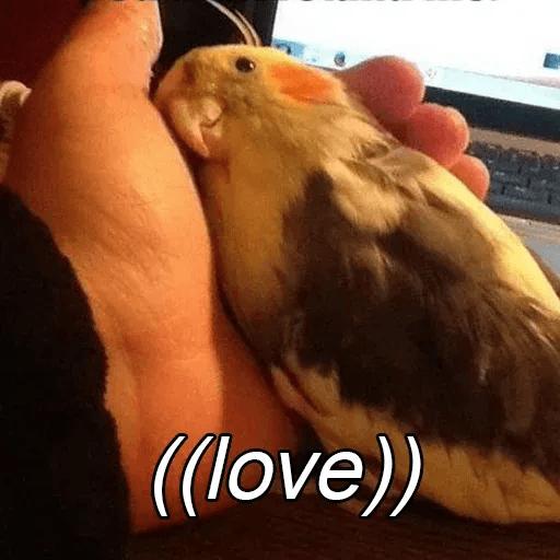 Bird 1 - Sticker 6