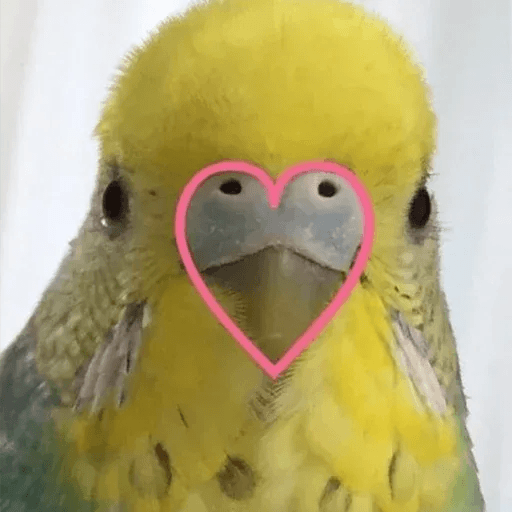 Bird 1 - Sticker 19