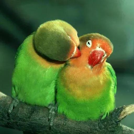 Bird 1 - Sticker 20