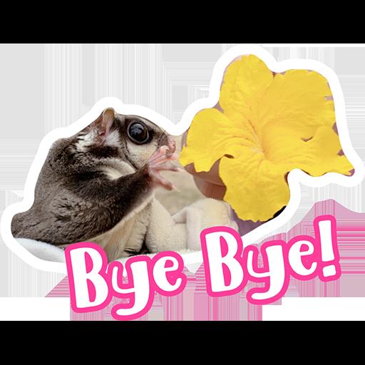 Sugar glider BB & BNUI (IG: lovelybjai) - Sticker 26
