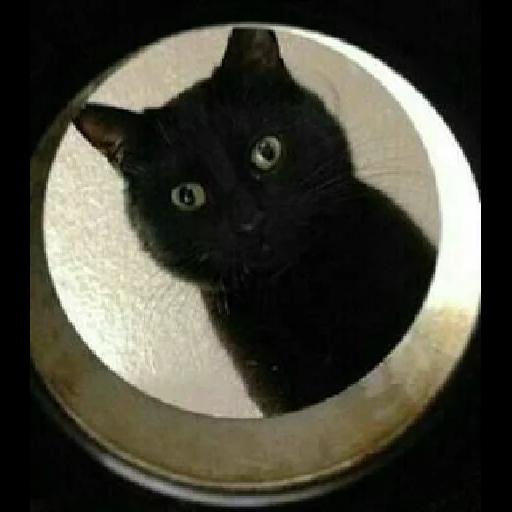 Cat2 - Sticker 30