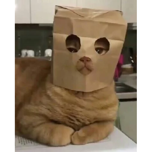 Cat2 - Sticker 22